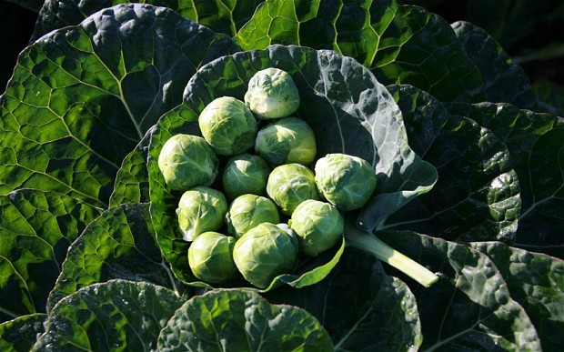 brussels-sprouts_2815864b