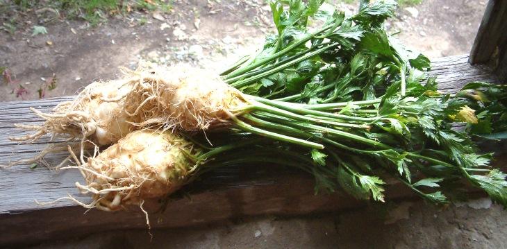 Celeriac.jpg